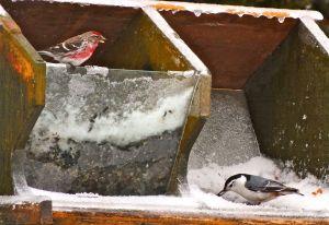Ice-BirdFeeder