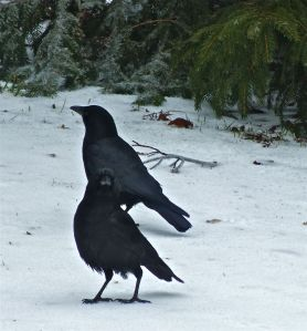Ice-Crows