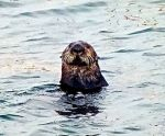 Wildlife abounds  in Monterey