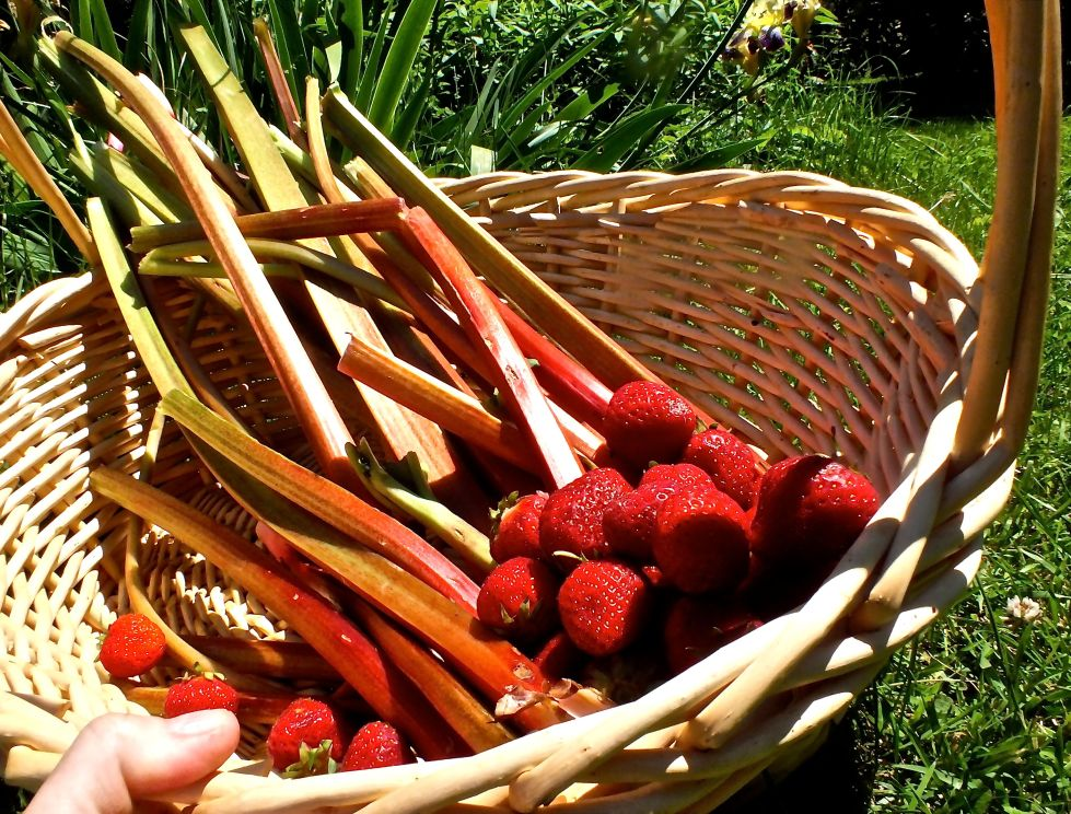 The harvested fruit-